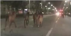 佛山一马路惊现十几匹马飞奔 还与小汽车争道