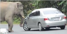 大象怒怼小汽车
