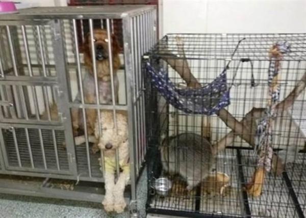 长久以来,吃狗肉颇有争议,保护者和支持者舆论战喋喋不休。今日,台湾正式立法,宣布禁止吃猫肉、狗肉,违者判刑重罚。此举为亚洲首例。 据台湾中时电子时报报道,4月11日,台湾立法机构三读修正通过的动物保护法部分条文,对虐杀动物加重刑罚,条文订明宰杀、故意伤害或使动物遭受伤害,致动物肢体严重残缺或重要器官功能丧失,将判处2年以下有期徒刑或拘役,最高罚款200万新台币(约合人民币45万元)。 与此同时条文明确规定,贩卖、购买、食用或持有狗、猫的屠体、内脏或含有其成分的食品,可判罚5万至25万新台币(约合1.