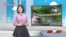 弄岗国家级自然保护区 鸟儿欢唱