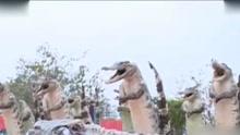 77条鳄鱼被挖眼掏空做成标本