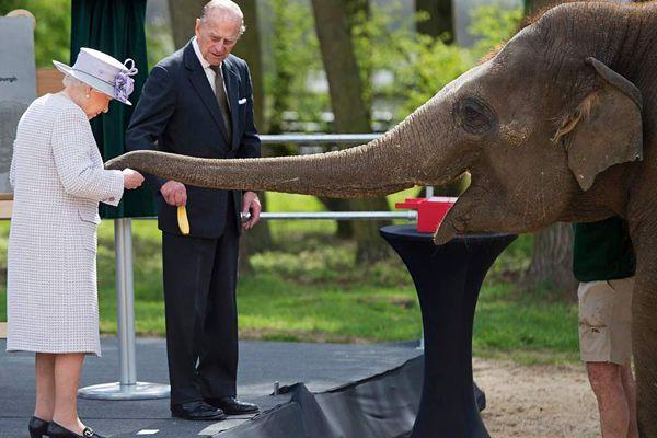 英女王夫妇为大象养护中心揭幕 亲手喂香蕉与大象有爱互动