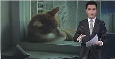 男子报警称儿子卡窗台 警方赶到发现儿子是只猫