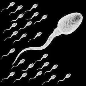 过去50年男人精子质量下降了一半!这4种男人精子质量最差!