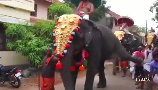 印度暴脾气圈养大象将游行观众踢飞