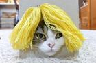 猫咪戴假发塑造百变造型