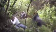 金刚之怒 游客拍照离太近 猩猩一拳推倒俩大汉