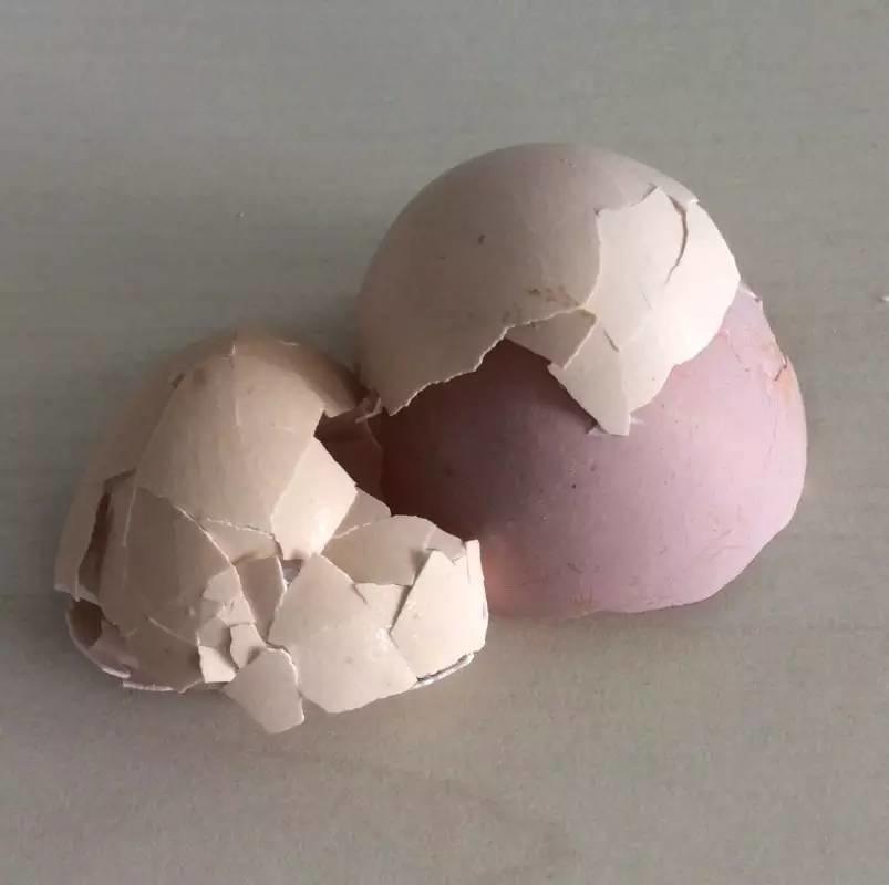 吃鸡蛋扔掉蛋壳,这简直是暴殄天物!殊不知蛋壳还有这么大妙用→→
