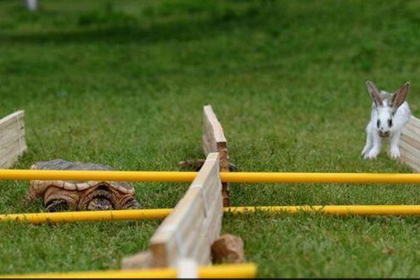 长沙举行动物田径赛跑 龟兔打平手
