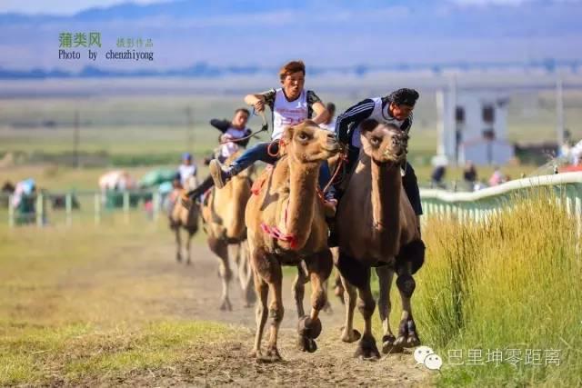 壁纸 草原 动物 马 骑马 桌面 640_427