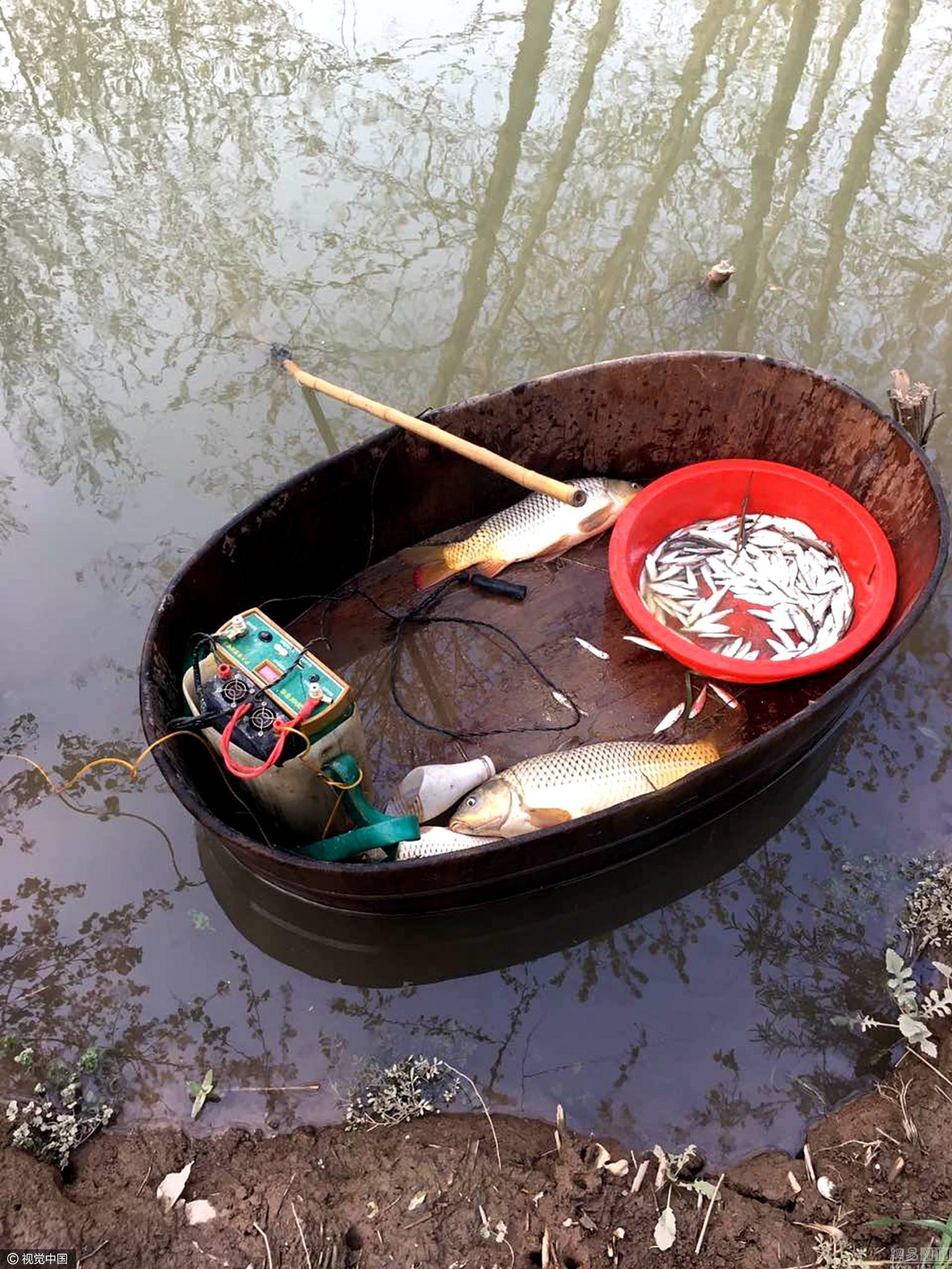 男子为尝鲜 划木盆长江电鱼16公斤被抓