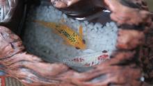广艺大三学生自学技法以琥珀画创业