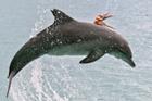 章鱼为防被海豚吃紧黏其身