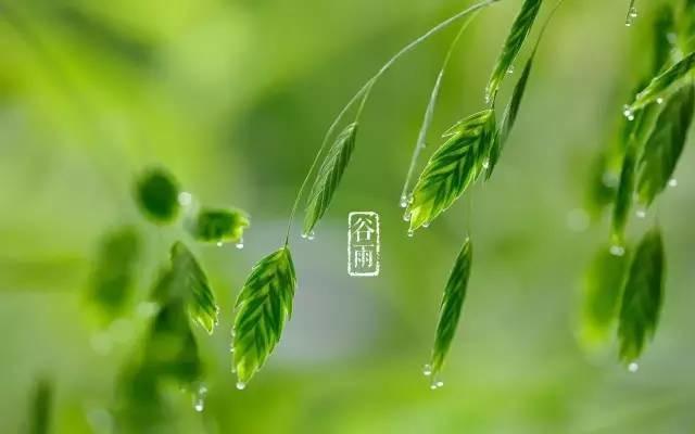谷雨一到,春天就跑,再不跟着节气养生就晚啦!