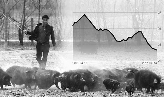 猪价触及1年半低点 养殖户与屠宰企业博弈近临界点