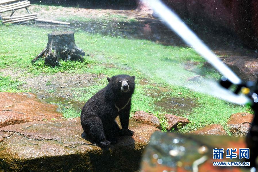 印度:热浪中的动物_国际新闻_环球网