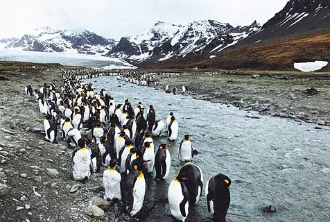 美呆!新西兰摄影师用手机拍南极美景