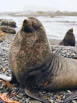 新西兰摄影师用手机拍南极美景