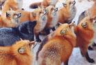 全球被动物占领的胜地