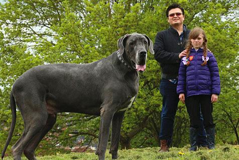 吃很多还不胖!英国最高狗做到了