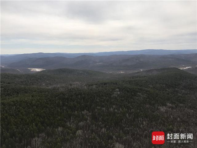 航拍大兴安岭火灾受损林区:被毁林区生态恢复还需百年