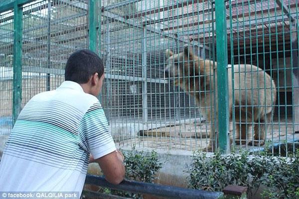 惨!巴勒斯坦9岁男童动物园喂熊被咬断胳膊