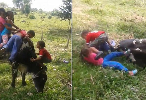 熊孩子!哥伦比亚6孩童爬上公牛背部遭其愤怒甩下