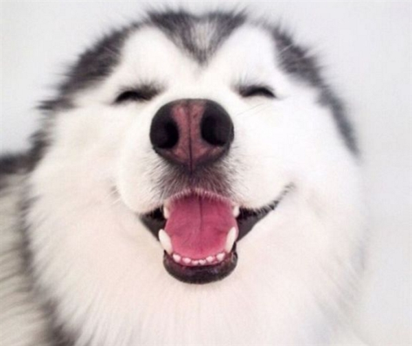 它最大的特点是各式各样的笑容,微笑,咧嘴笑,憨笑,吐舌头笑,哈哈大笑