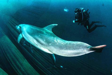 意海豚遭渔网捕捉 摄影师拍逃脱瞬间
