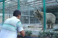 9岁男童动物园喂熊被咬断胳膊