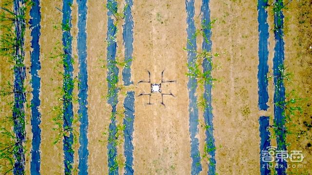 无人机下乡特写:海归植保队征服留守老农的万亩果园