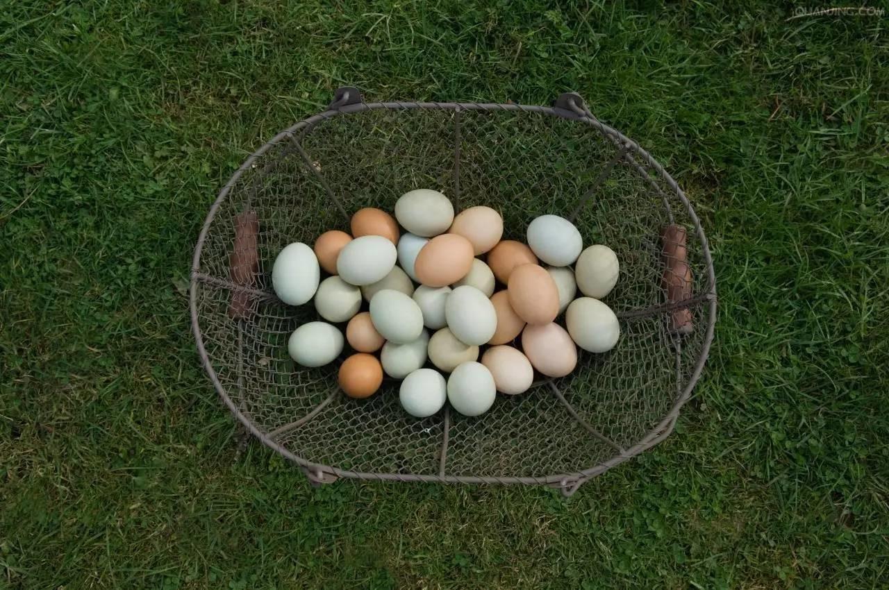 """一颗蛋可以有多少种""""死""""法?学会这些之前,别说你会吃鸡蛋 - jgch - 姜国臣的博客"""