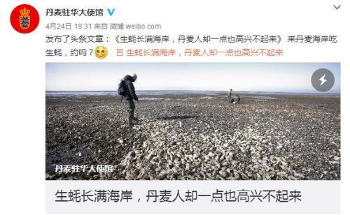 """丹驻华使馆:丹麦生蚝成灾如何解?中国网友:可建""""蚝宅"""""""