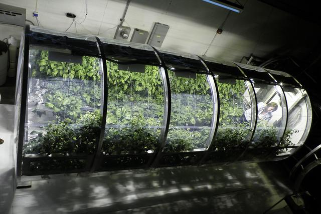 NASA公布充气温室原型:未来可用于火星探索任务