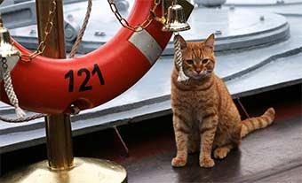 很萌:俄海军莫斯科号上的喵星人