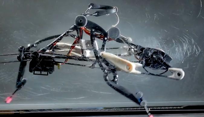 机器人还在学走路 这只鸵鸟机器人已经会跑了