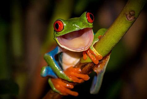 野生動物攝影大賽展現奇幻大自然