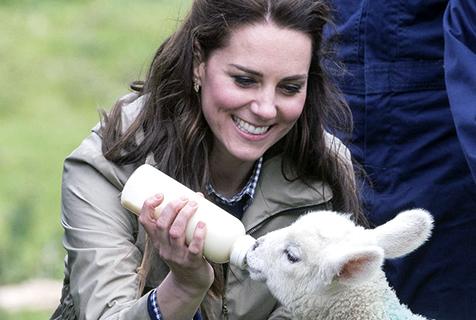 凱特王妃訪農場 為羊羔喂奶展溫柔