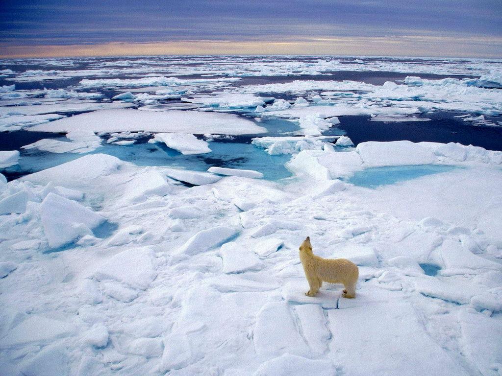 北极冰雪融化速度惊人 2040年可能完全无冰存在