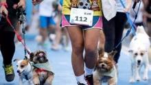泰国举办宠物狗马拉松比赛