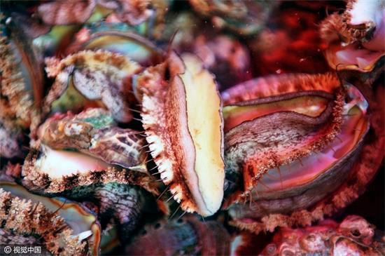 青岛:探访休渔期海鲜市场 价格平稳
