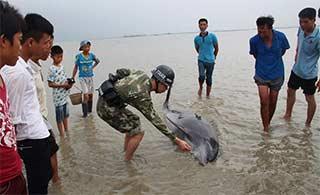 边防官兵救助搁浅海豚