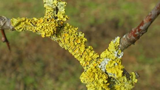 澳海关误销外借珍稀苔藓标本引不满
