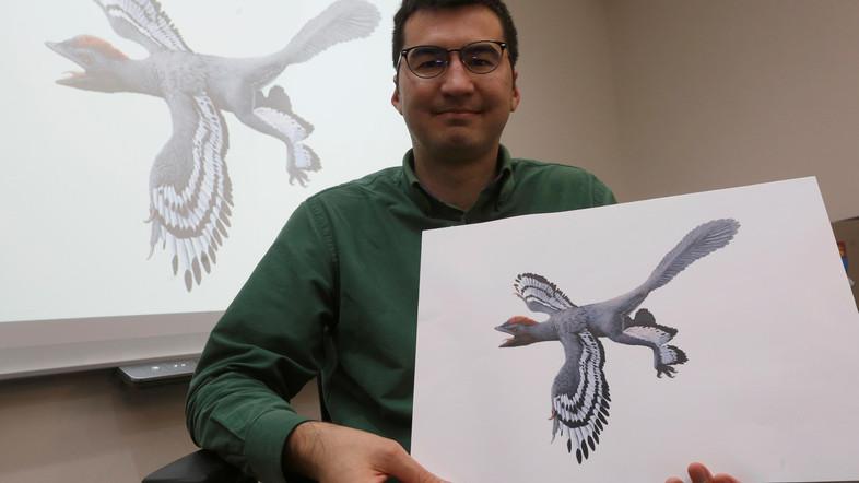 """科学家发现全新恐龙物种 命名""""中华贝贝龙"""""""
