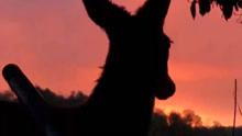 鹿大胆亲近猎人蹭枪管求抚摸