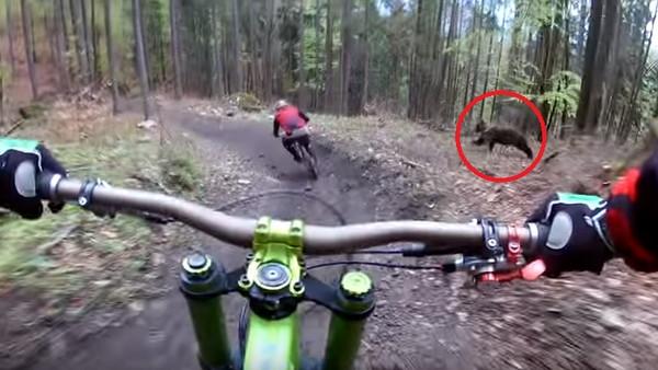 山地车速降遭棕熊狂追:运动相机拍下惊险全程