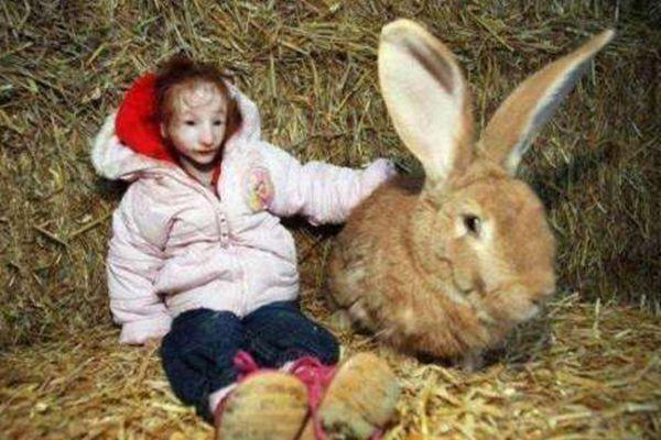 英国现实版拇指姑娘:一辈子长不大 14岁比兔子还小