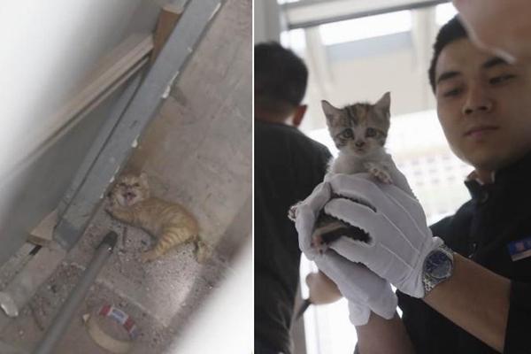 两只小猫被困柱子里 十多人破开隔板救出
