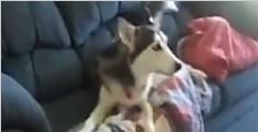 最电视迷的狗狗