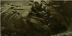 埃及一古墓出土17具木乃伊 大部分保存完好